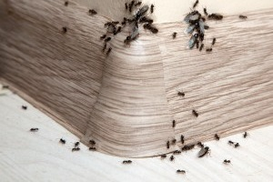 Ant Control, Pest Control in Archway, N19. Call Now 020 8166 9746