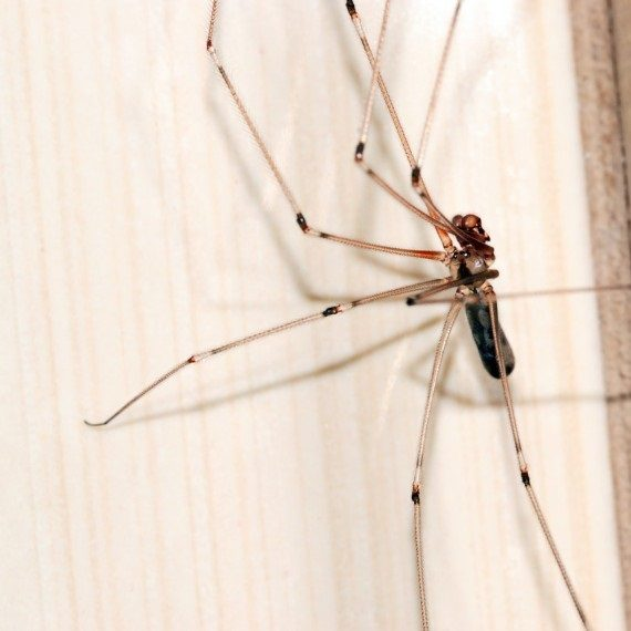 Spiders, Pest Control in Archway, N19. Call Now! 020 8166 9746