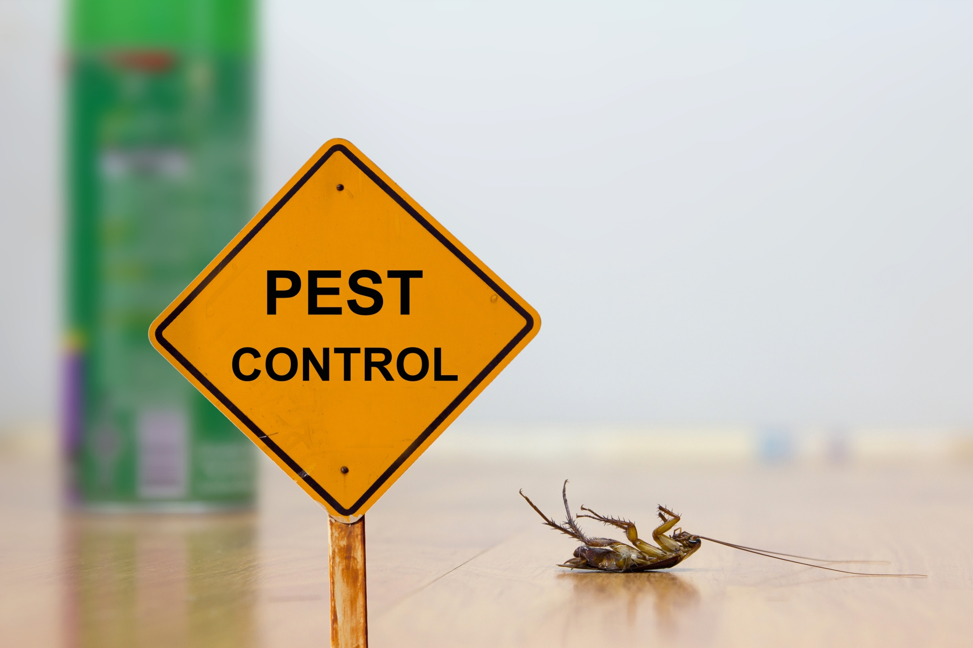 24 Hour Pest Control, Pest Control in Archway, N19. Call Now 020 8166 9746